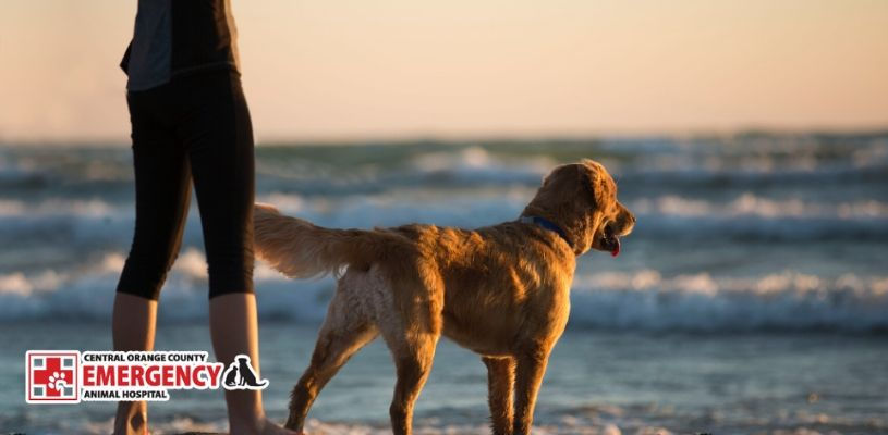 Best Dog Breeds for Newport Beach