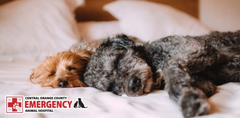 COVID-19 Tips for Pets - pet emergency Newport Beach